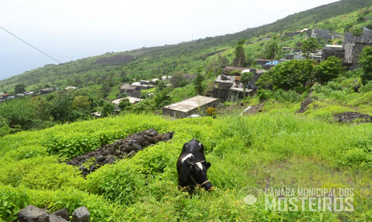 Agricultura: Câmara Municipal prepara plano de ação para época das chuvas