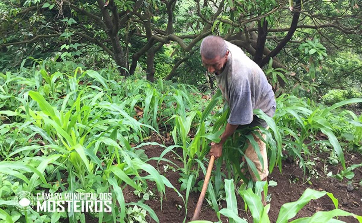 Azágua: Chuvas de finais de Agosto e início de Setembro relançam ano agrícola