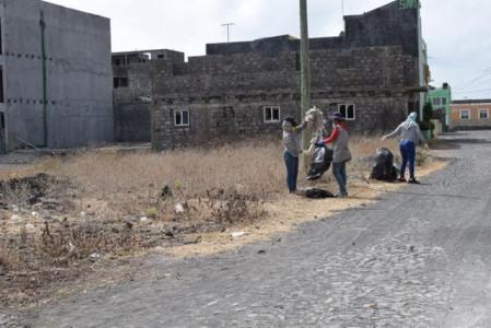 Dia do Ambiente: Câmara Municipal organiza campanha de limpeza e de plantação de árvores